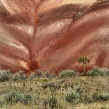 USA - OregonPainted Hills.4/8-2018 kl. 18.55