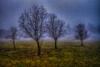 Monettræer