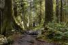 Usa - Washingtonolympic National Park. Hoh Rain Forest.12/8-2018 Kl. 16.11